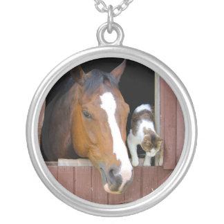 Chat et cheval - ranch de cheval - amants de collier