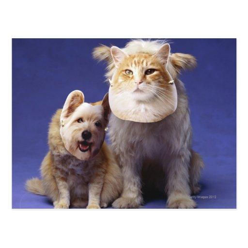 Chat et chien avec des masques carte postale