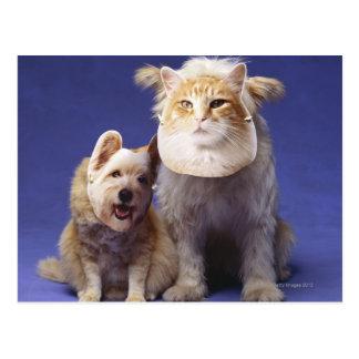 Chat et chien avec des masques cartes postales