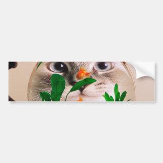 Chat et poissons - chat - chats drôles - chat fou autocollant de voiture