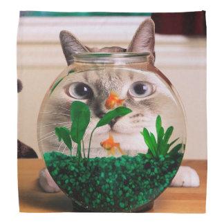 Chat et poissons - chat - chats drôles - chat fou bandana