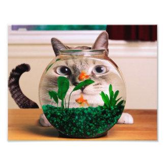 Chat et poissons - chat - chats drôles - chat fou impression photo