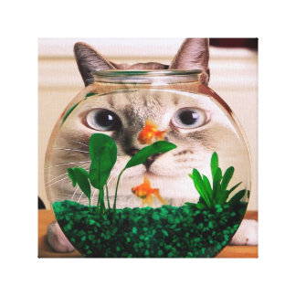 Chat et poissons - chat - chats drôles - chat fou toile