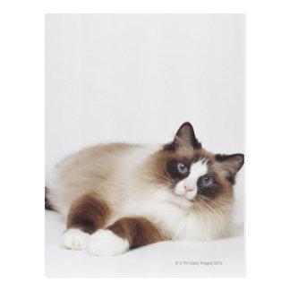 Chat étendu carte postale