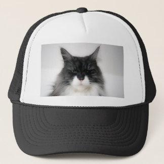 chat fâché casquette
