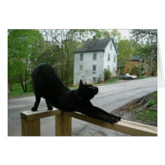 Chat faisant la carte de voeux de yoga de matin