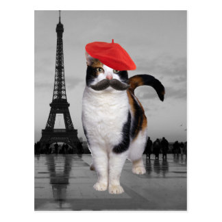 Chat français à Paris Cartes Postales