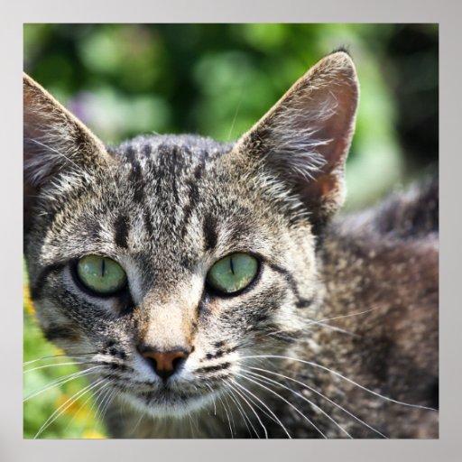 chat gris de rayure avec les yeux verts affiches zazzle. Black Bedroom Furniture Sets. Home Design Ideas