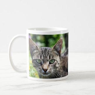 Chat gris de rayure avec les yeux verts tasses