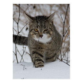 Chat gris mignon dans la neige carte postale