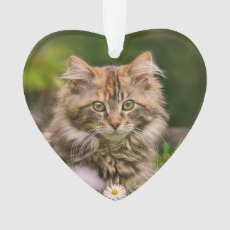 Chat mignon de chaton de ragondin du Maine dans un