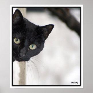 Chat noir - avec la frontière posters