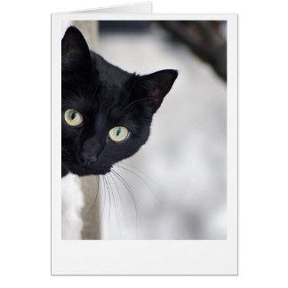 Chat noir carte de vœux