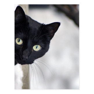 Chat noir carte postale