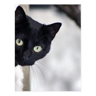 Chat noir carte postale