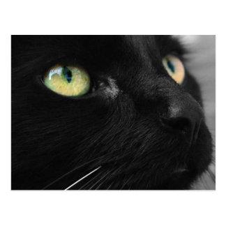 Chat noir chanceux carte postale