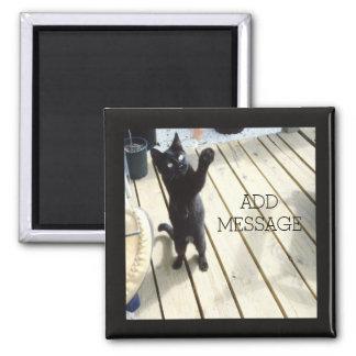 Chat noir drôle frappant l'air dehors aimant