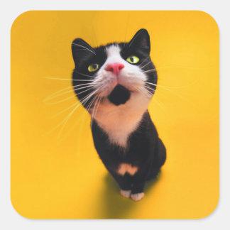 Chat noir et blanc de chaton-animal familier de sticker carré