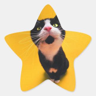 Chat noir et blanc de chaton-animal familier de sticker étoile
