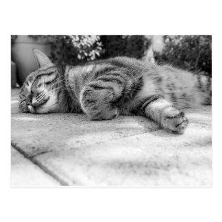 Chat noir et blanc de sommeil carte postale