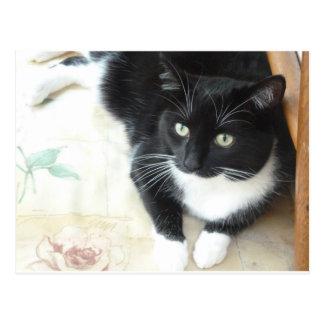 Chat noir et blanc mignon carte postale