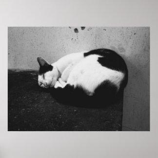 Chat noir et blanc posters