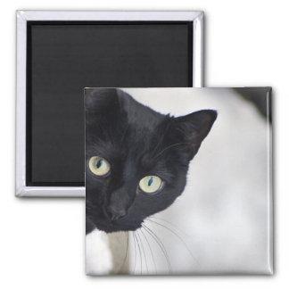 Chat noir magnet carré