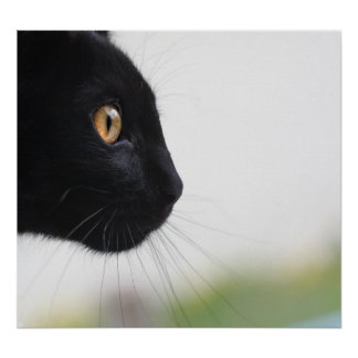 Chat noir posters