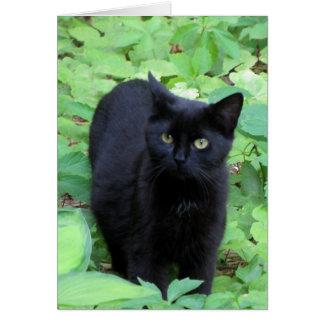 Chat noir sur les plantes vertes de chaux carte de vœux