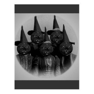 Chat noir vintage/sorcières carte postale