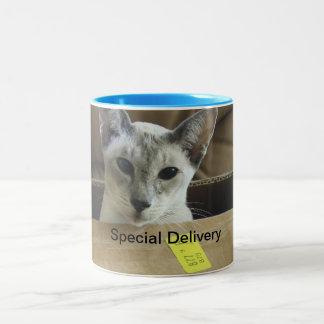 Chat observé par bleu de la livraison spéciale mug bicolore