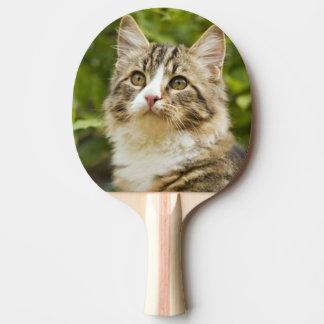 Chat Raquette De Ping Pong