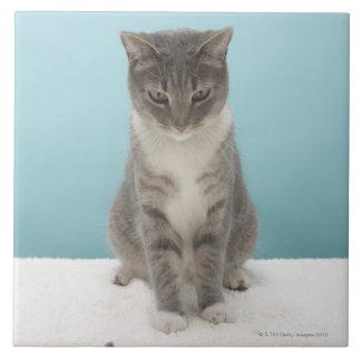 Chat regardant la souris de jouet sur la grand carreau carré