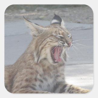 Chat sauvage de baîllement sticker carré