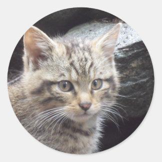 Chat sauvage écossais sticker rond