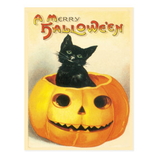 Chat se reposant dans une carte postale de cru de