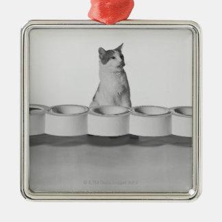 Chat se reposant et léchant près de la cuvette ornement carré argenté