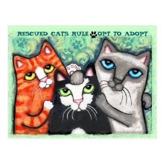 Chat secouru/abri cartes postales