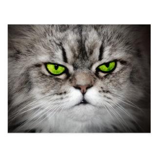 Chat sérieux avec les yeux verts carte postale