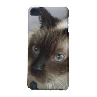 Chat siamois : cas de contact d'iPod Coque iPod Touch 5G