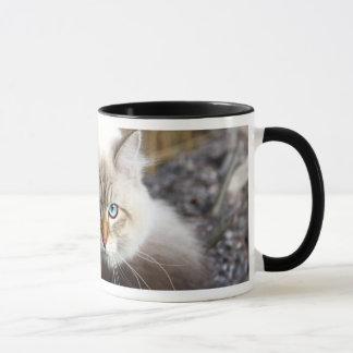 Chat sibérien dans une forêt d'automne mugs