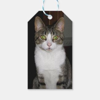 Chat tigré avec de grands yeux verts étiquettes-cadeau