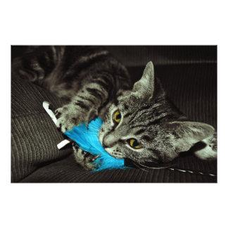 Chat tigré avec la plume impression photographique