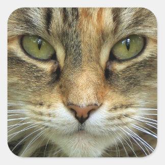 Chat tigré avec l'autocollant de portrait de yeux sticker carré