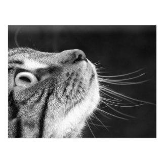 Chat tigré en carte postale noire et blanche