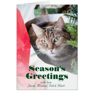 Chat tigré femelle avec des yeux bleus scrutant carte de vœux