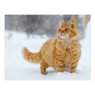 Chat tigré orange dans la neige carte postale