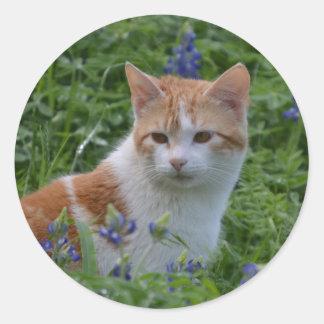 Chat tigré orange et blanc sticker rond