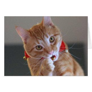 Chat tigré orange utilisant le collier rouge de carte de vœux