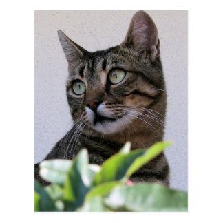 Chat tigré se reposant à la nuance derrière le carte postale